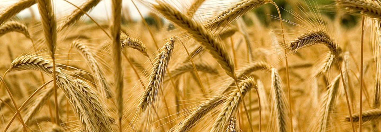 Sucursal Online de Agro Fertil en Agrofy