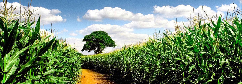 Sucursal Online de Garcia Agropecuaria en Agrofy