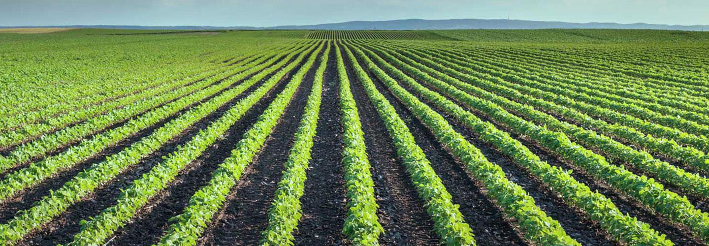 Sucursal Online de Jose Vijande en Agrofy