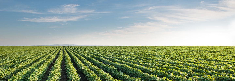 Sucursal Online de Anghilante Repuestos en Agrofy
