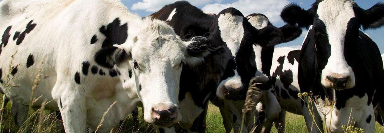 Sucursal Online de Tauron Biotech en Agrofy